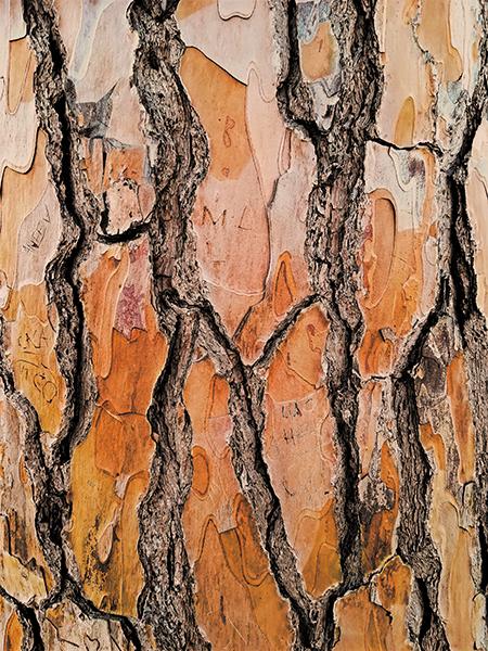 イタリアの模様。木目